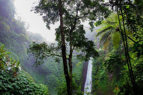krioklys,atogrąžų miškai,miškas,gamta,paparčiai,džiunglės,žalias,medžiai,miškai