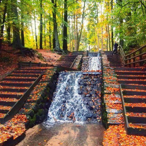 krioklys,lapai,miškas,gamta,vandens srautas,medžiai,parkas,vanduo