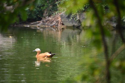 waterfowl splash water park