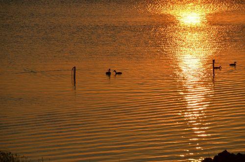 vandens paukščiai,antis,jūra,ežeras,saulėlydis,vakaras,twilight,taikus,platus,atspindėti,romantika,abendstimmung