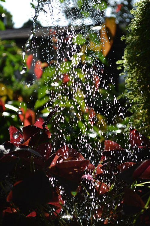watering water drops plants