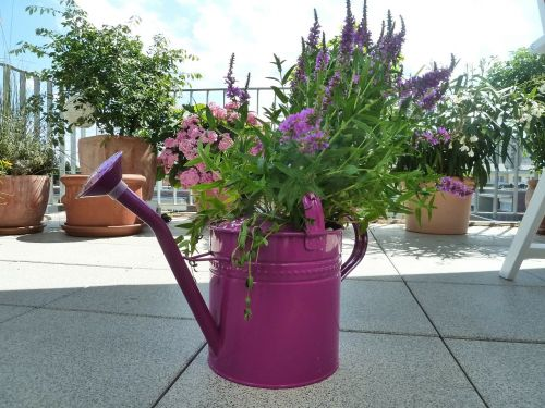 watering can purple casting