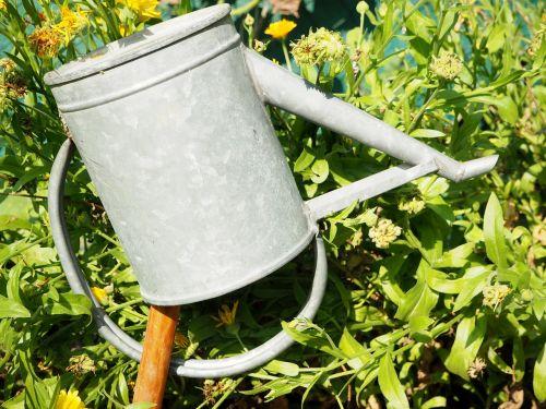 watering can garden marigold