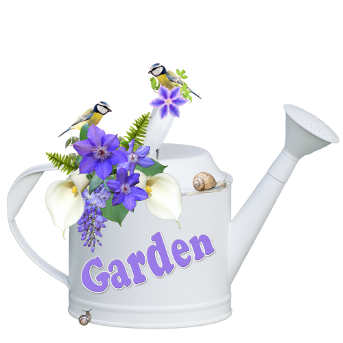laistytuvas,gėlės,Clematis,kalas,Wisteria,mėlynas lietus,mėlynos tits,sraigė,sraigės,balta,violetinė,sodas,vasara,gamta,izoliuotas,Iškirpti,skaidrus