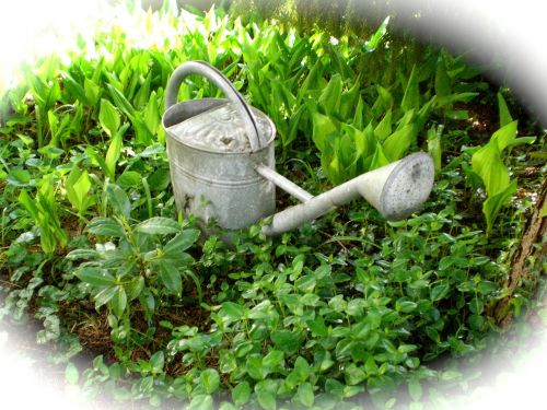 watering can casting irrigation