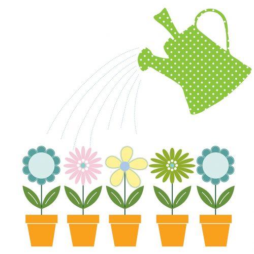 watering can flowers flower pots