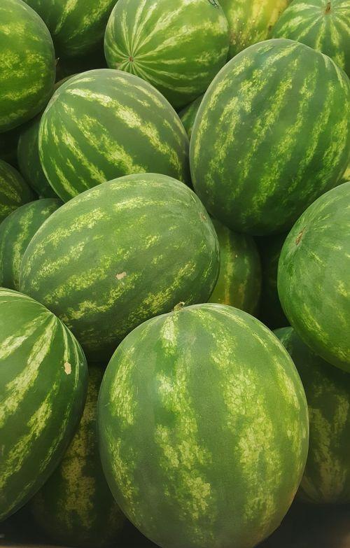 watermelon melon seedless