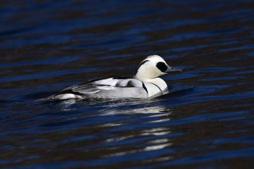 waters wild animals bird