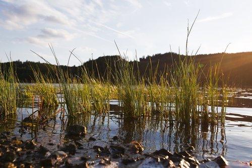 vandenys, pobūdį, atspindys, ežeras, dangus, kraštovaizdis, Reed, mediena, kelionė, žolė, horizontali, vasara, pakrantės, saulė, vakaras
