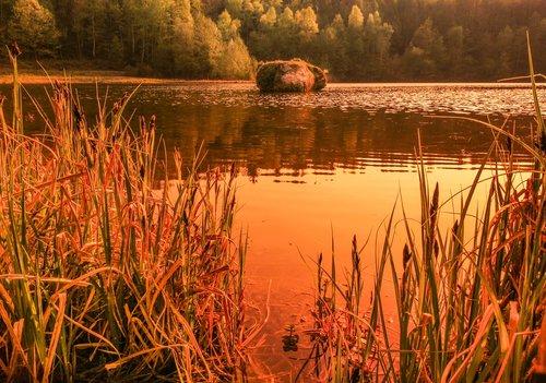waters  nature  krufter waldsee
