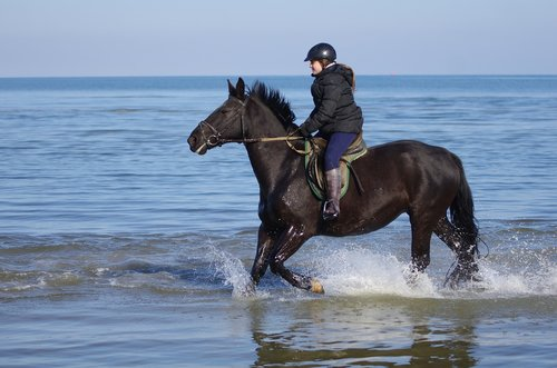 waters  horse