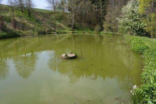 vandenys, upė, atspindys, pobūdį, ežeras, kraštovaizdis, vasara, natūralus tvenkinys, antis tvenkinys