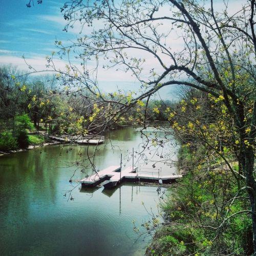 svajonė, svajingas, vanduo, šepetys, medis, filialai, galūnės, prieplauka, vandens svajonė
