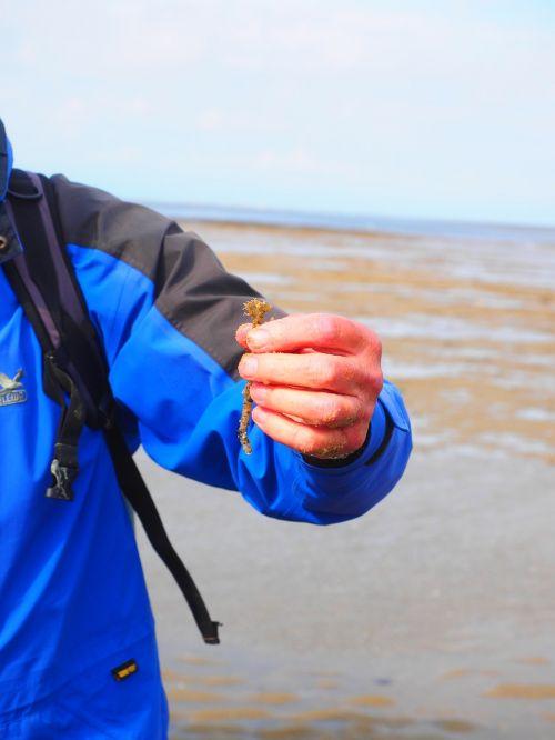 watt leader tree tube worm worm