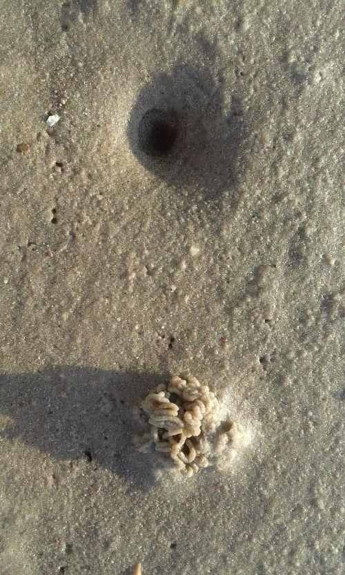 watts lugworm wadden sea