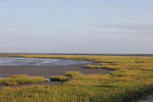 watts  north sea  grass