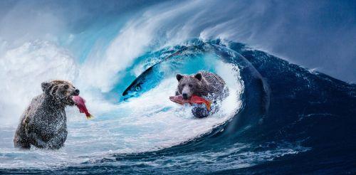 wave sea bear