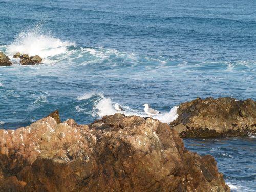 waves winter coastal