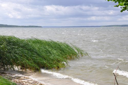 waves of storm plauer see reed