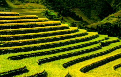 Waves Of Terraced Fields