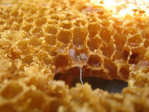 wax radius bee