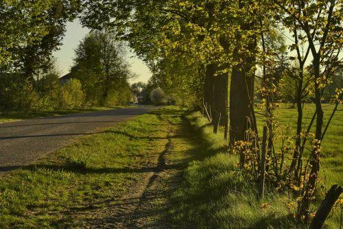 way roadside trees roadside
