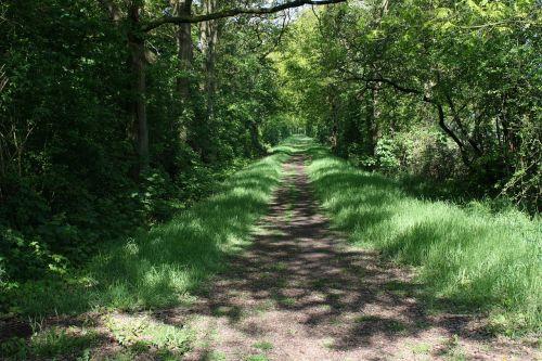 kelias,kelias,medžiai,žalias,gamta,kelias,kelionė,miškas,juostos,lauke,scena,mediena,pavasaris