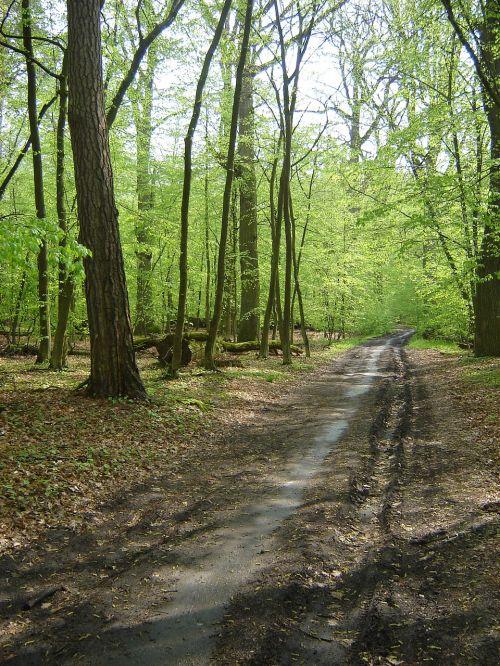 kelias,kelias,rezervas,pavasaris,miškas,žalias,samanos,kelias,parkas