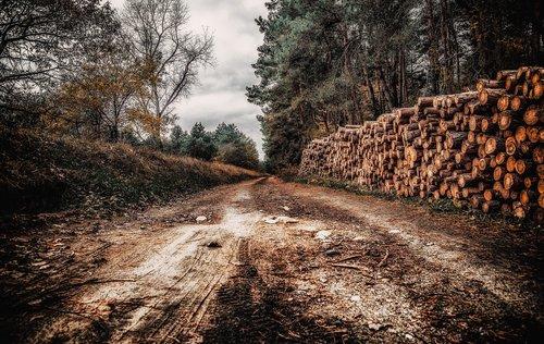 way  the path  gloomily