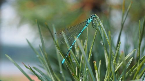 ważka nature insect
