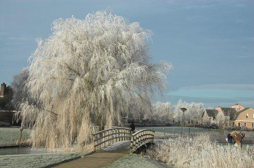weather  winter  snow