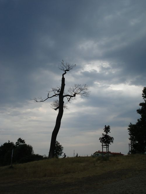 weather tree clouds
