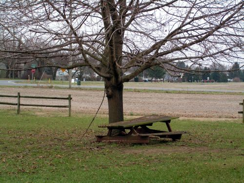 Weathered Picnic Table