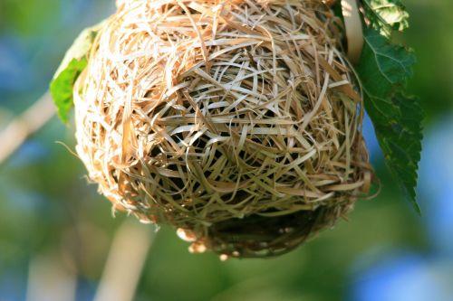 Weave Of Nest