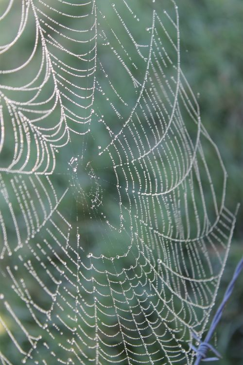 web spider dew