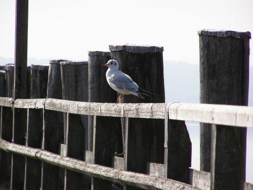 web lake seagull
