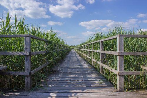 web boardwalk reed
