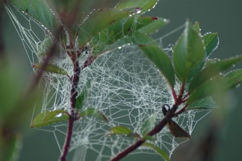 web jumble spider