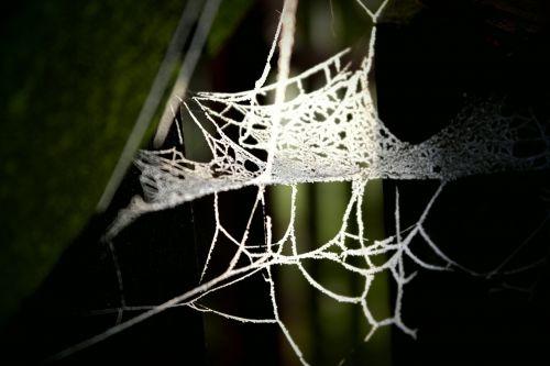 web shade backlight