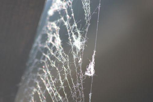 web network spider
