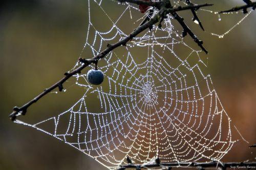 web drops moisture