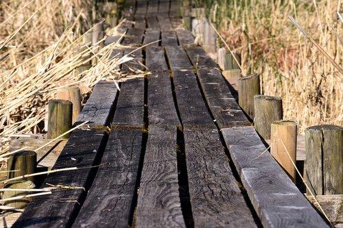 interneto, lentos, žolė, Reed, toli, sausas, vaikščioti, atlaikė, mediena, pobūdį, miškai
