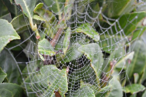 web  nature  cobweb
