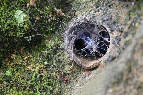 web  cobweb  nature