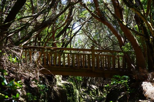 web bridge forest