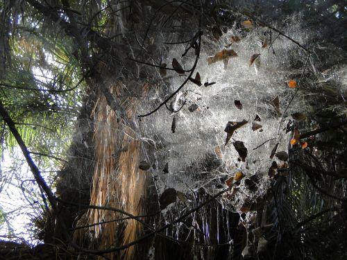 web spider oasis