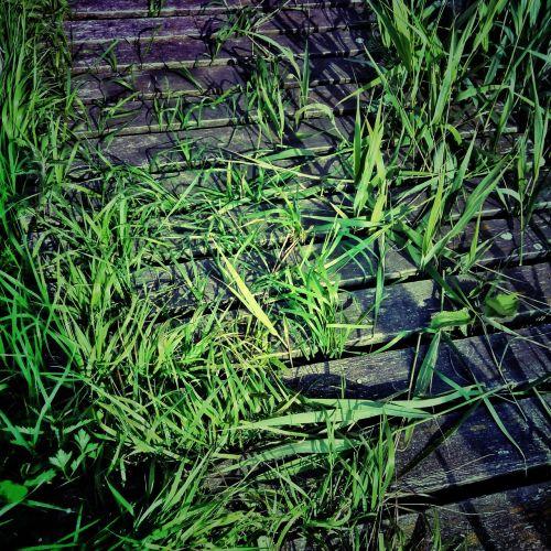 web green grass
