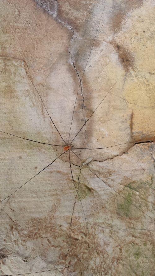 weber servant kanker spider
