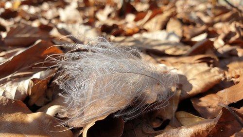 wedge  down  wind
