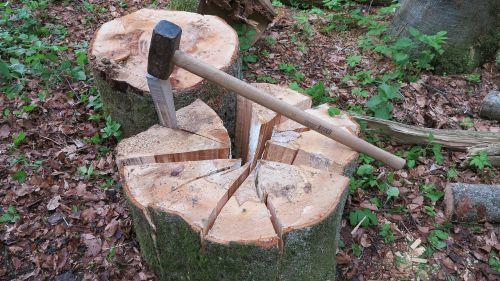 wedge wood chop tree segments